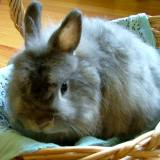 Maybe you can find a sweet rabbit like my bunny Thomas!
