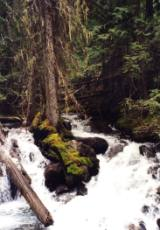 The sound of a rushing stream beats listeining to iTunes all day.
