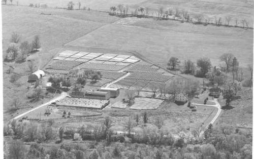 The Schroeder's mink farm in 1949. Photo compliments of Brian Turner and Bernice Schroeder.