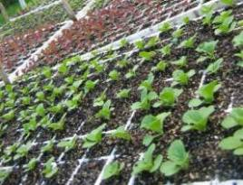 Organic farmers call this bed for seedlings the 'hoop house.'