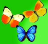 This visual aid illustrates that butterflies that will fly away when you just get started!