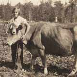 Jan with her cow.